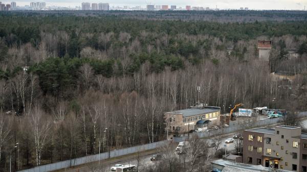 Проект дублера Щелковского шоссе, предположительно, пройдет через Балашиху, а не «Лосиный Остров»